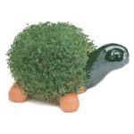 chia-turtle
