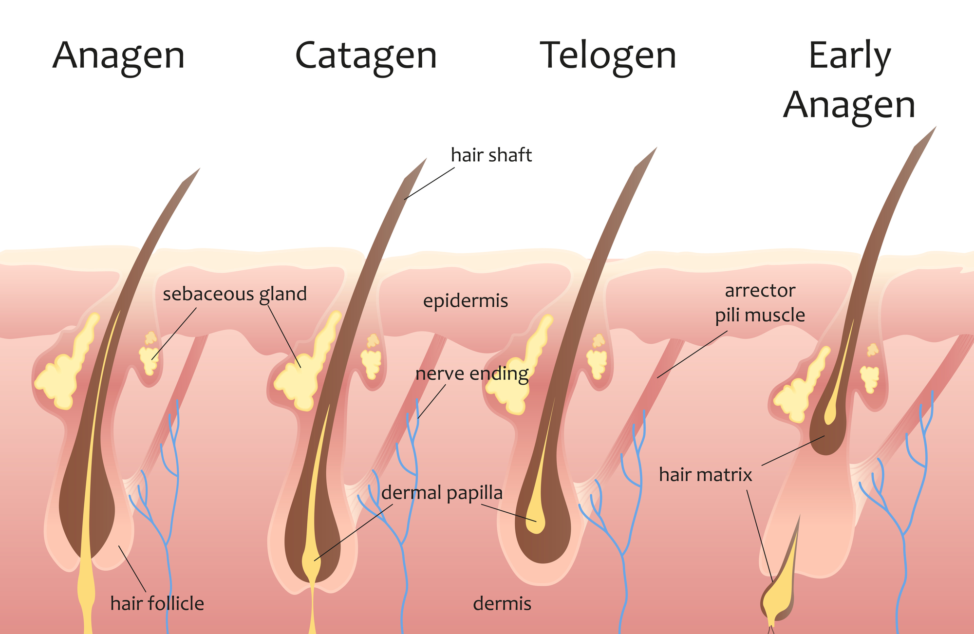 How Do You Stop Hair Loss Naturally