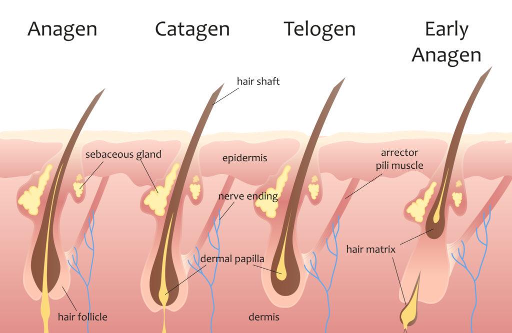 use cinnamon to stop hair loss